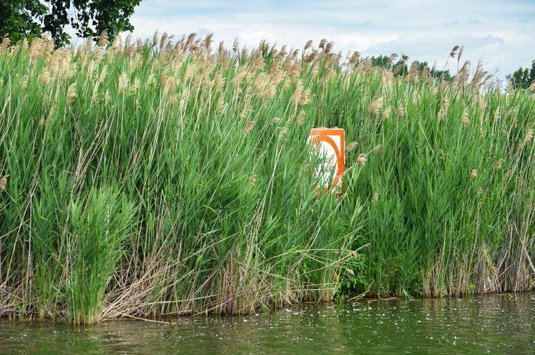 TREATMENT OF PHRAGMITES AND JAPANESE KNOTWEED ALONG RCOC ROADSIDES IN VARIOUS COMMUNITIES TAKING PLACE THROUGH OCTOBER